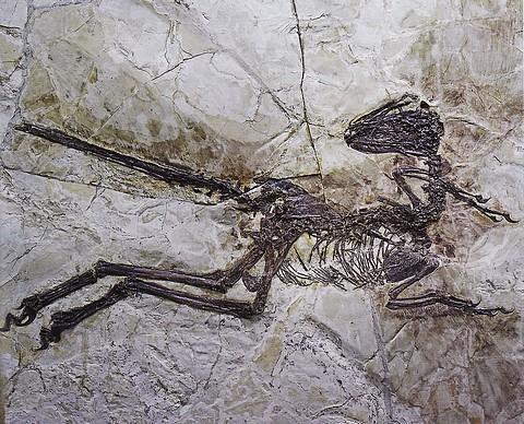 羽毛恐竜.jpg