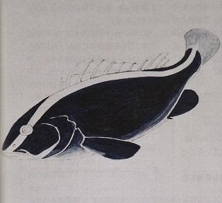 プルシアン・ブルーで描いたルリハタ.jpg