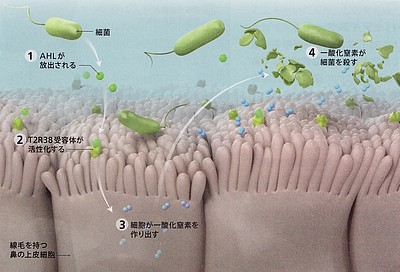 一酸化窒素プロセス.jpg