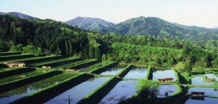 奥出雲の水田風景2.jpg