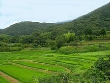 里山(神奈川県秦野市).jpg