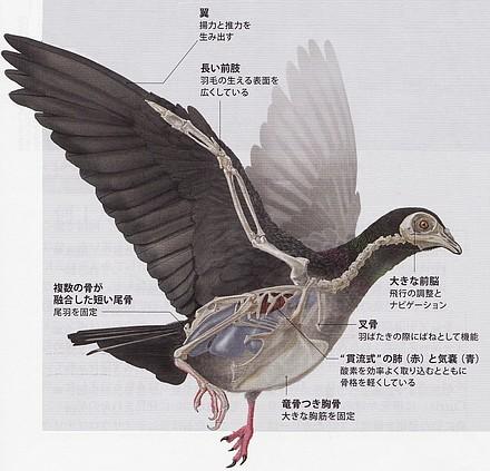 鳥の特徴.jpg