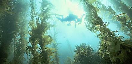 Kelp Forest-2.jpg