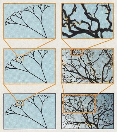 Pollock-1.jpg
